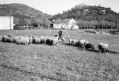 berger-et-moutons